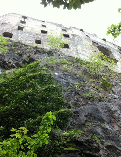 Likvidácia náletových rastlín - Likava